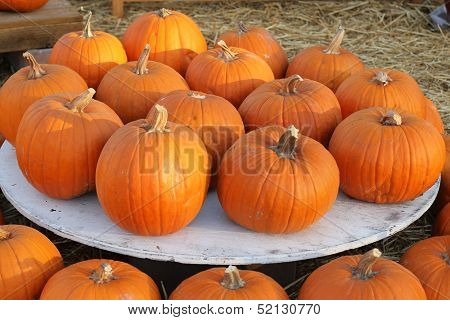 orange pumpkins outside on white circle