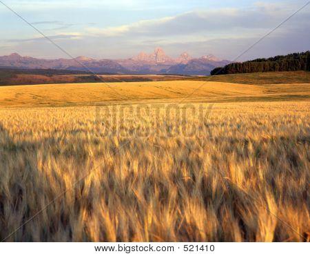 Wheatfield & Tetons Range
