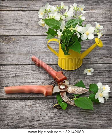 Jasmine Flowers And Secateurs On  Wooden Wall