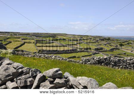 Rural Walls
