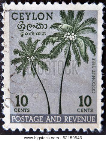 Ceylon - Circa 1951: A Stamp Printed In The Ceylon Shows Coconut Tree, Circa 1951