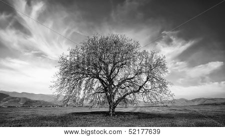 Bw Tree In Autumn