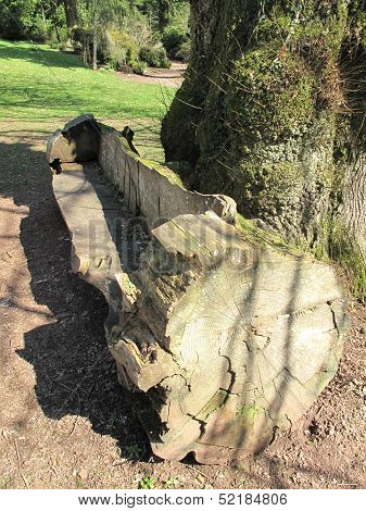 Cut Log Bench Within Forest Landscape