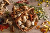 Autumn still-life with full basket of mushrooms