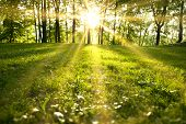 stock photo of morning sunrise  - Sunlight in the green forest spring time - JPG