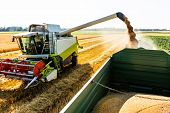 stock photo of combine  - a cornfield with wheat at harvest - JPG