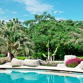 stock photo of swales  - palm trees and flowers around the outdoor pool - JPG