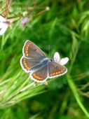 Butterfly In A Grass