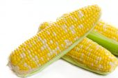 stock photo of corn cob close-up  - Close up of tasty corn on the cob - JPG
