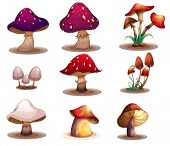 stock photo of edible mushrooms  - Illustration of the different kinds of mushrooms on a white background - JPG
