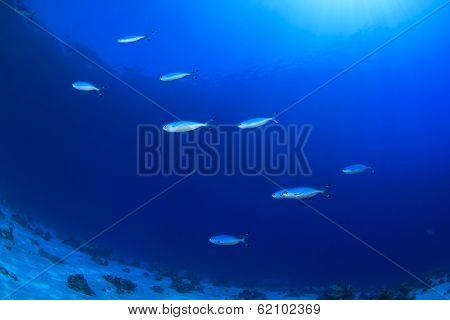 Underwater Ocean Background with fish