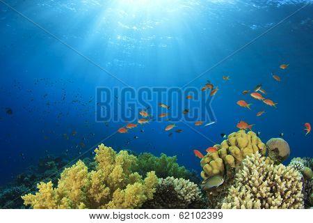 Coral Reef in Ocean