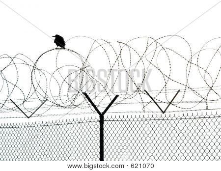 Lonely Crow On Prisons Fence