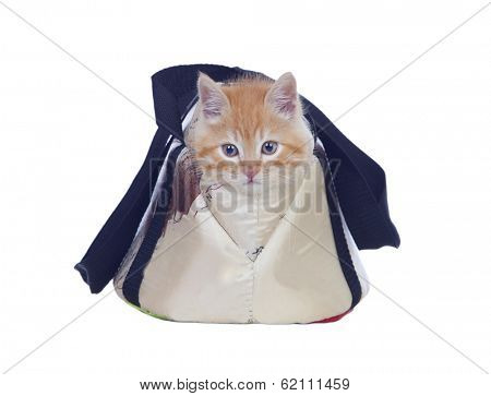 Beautiful red haired cat tucked into its carrying bag isolated on a white background