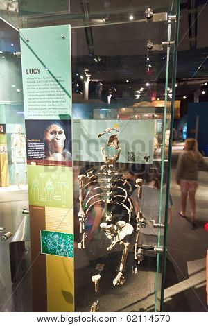 Human Skeletton In The American Museum For National History