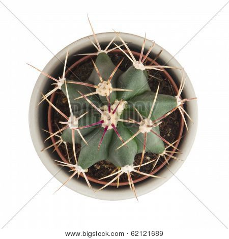 Little Prickly Cactus In A Flower Pot On A White Background