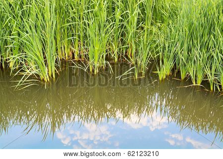 Reflection Of Water Vegetation And Blue Sky