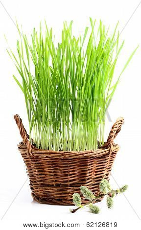 Basket With Grass And Pussy-willow Twig.