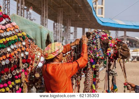 PUSHKAR, INDIA - NOVEMBER 22, 2012: Man decorating his camel for camel decoration contest at Pushkar camel fair (Pushkar Mela) -  annual camel livestock fair  and tourist attraction