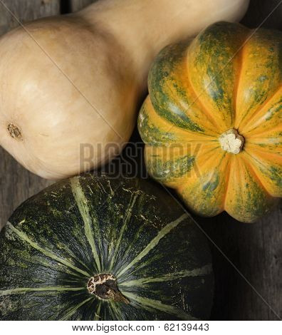 Squash Collection,Top View
