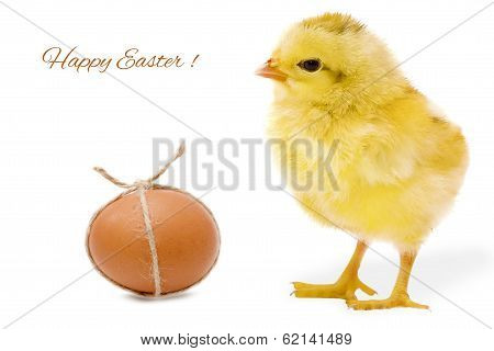 Easter card with egg and chicken