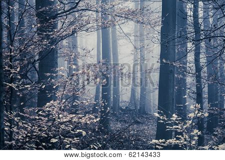 Melancholic Foggy Forest With Leaves In The Front