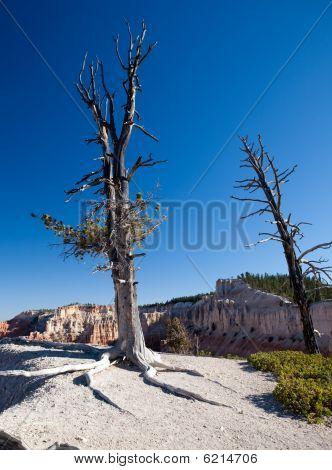 Near Barren Tree In The Bryce Canyon Desert