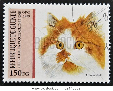 A stamp printed in Guinea shows a cat Tortoiseshell