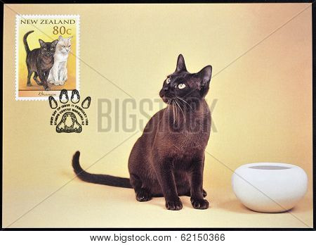 stamp printed in New Zealand shows Domestic Cat Burmese