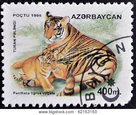 A stamp printed in Azerbaijan shows panthera tigris virgata