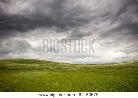 Meadow Before The Storm