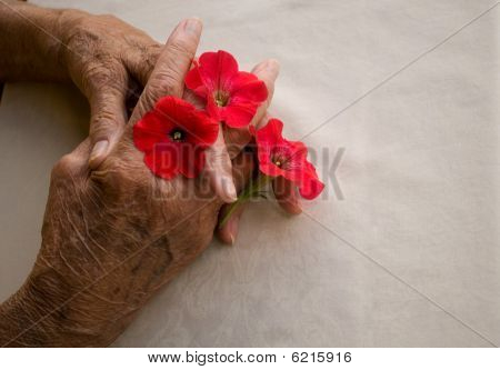 Folded Hands With Flower