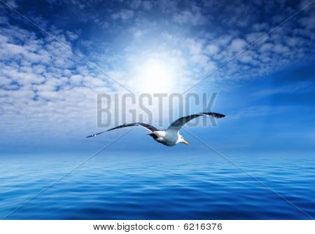 Blue sky and flying seagull
