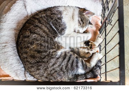 Sleeping Cat In The Cage