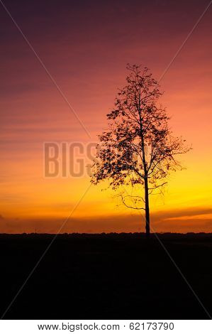 Tree With Sunrise