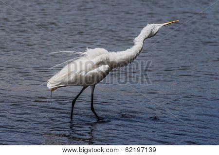 White Heron In Beach Water
