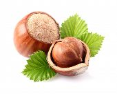 stock photo of hazelnut  - Hazelnuts with leaves - JPG