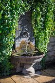 image of century plant  - Drinking fountain wall covered by garden plants - JPG