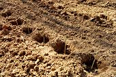 stock photo of afforestation  - Empty holes dug in the ground before tree planting - JPG