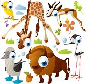 picture of booby  - Vector animal set - JPG