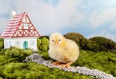 Easter chick sitting in a fairytale landscape with miniature house