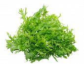 foto of escarole  - Fresh frisee chicory leaves isolated on white background - JPG