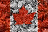 stock photo of canada maple leaf  - The image of the flag of Canada constructed entirely out of genuine maple leaves from species native to that country - JPG