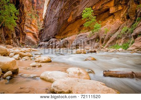 virgin river in zion national park utah