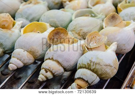 Grilled Sea Snails At Taiwan