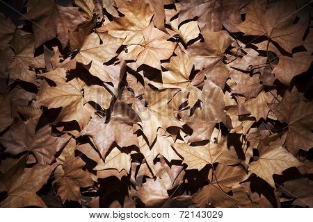 Dry Leaves With Vignettes