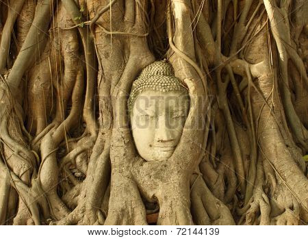 Stone Budda Head Traped In The Tree Roots At Wat Mahatha