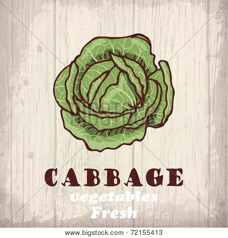 Fresh vegetables sketch background. Vintage hand drawing illustration of a cabbage