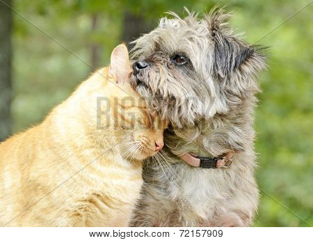 Cat and Dog Share Companionship in the Forest
