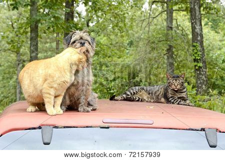Cats and Dogs in the Missouri Forest